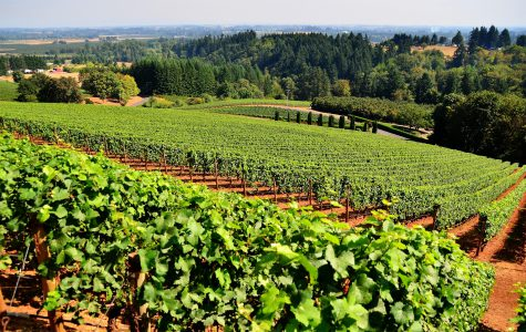 Self Drive Wine Tours Near Bangalore
