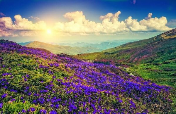 Places to visit during winters Neelakurinji from Bangalore