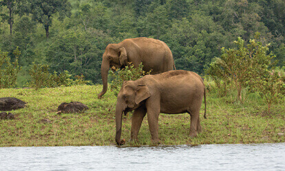 Rent a Cab from Kochi and Visit Thekkady